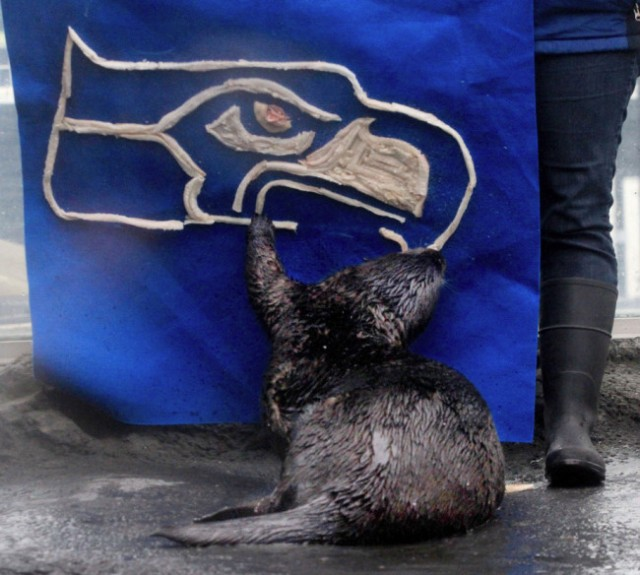 From http://dailyotter.org/2014/02/02/seattle-sea-otter-prepares-for-todays-super-bowl-by-devouring-his-teams-logo/