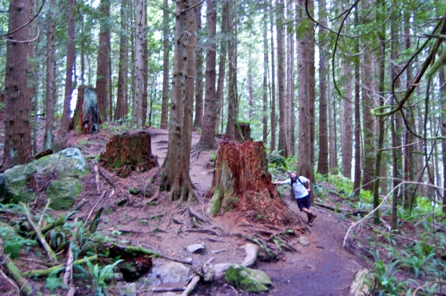 Ghostly tree stumps reminded us of how large these behemoths once were before logging days