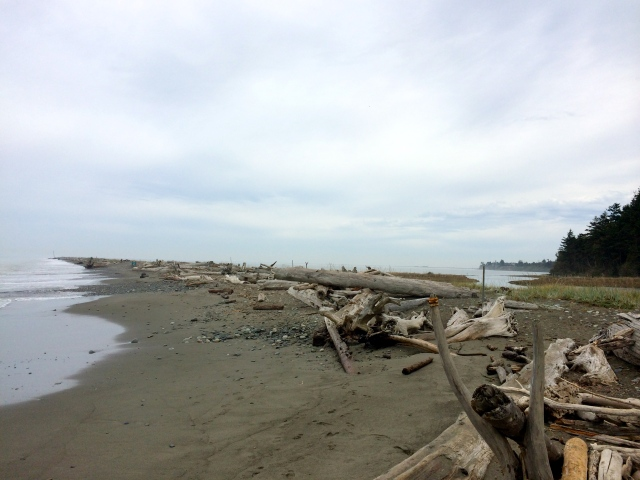 Pacific Northwest Beaches aren't like those back East..