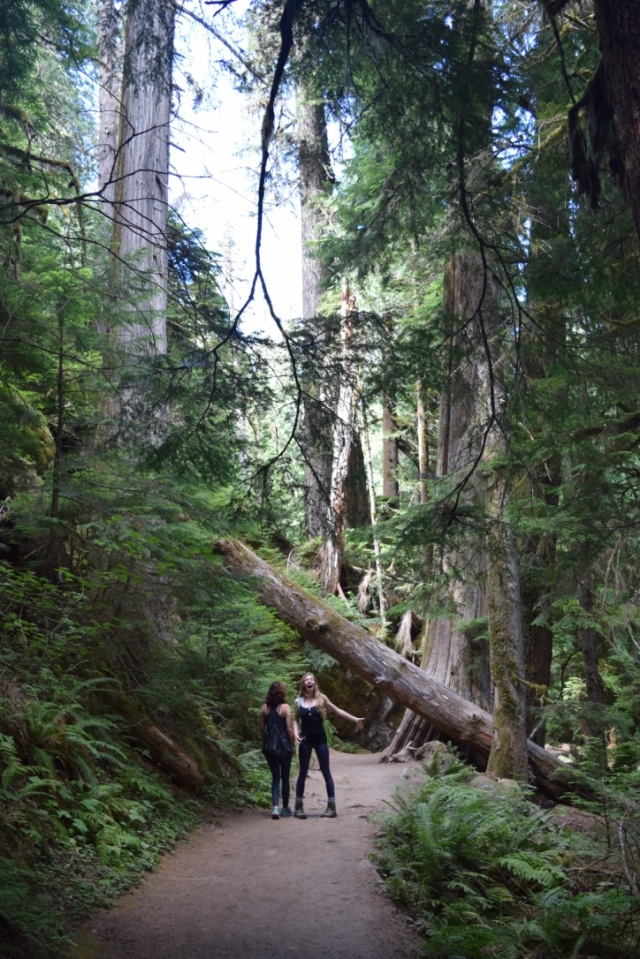 The trail was short, but full of giants.
