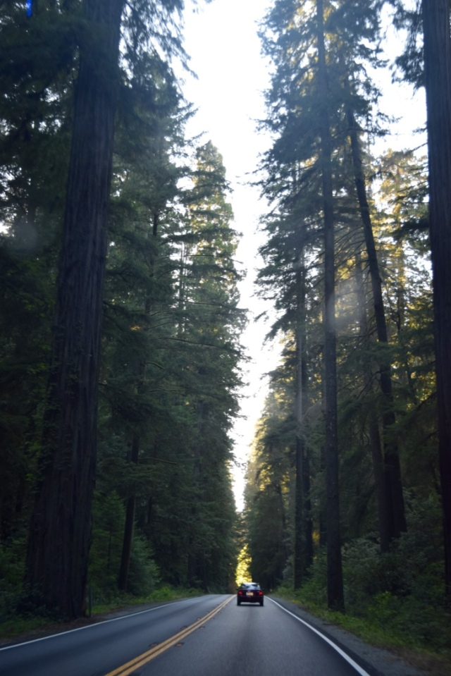 First glimpse of redwood trees